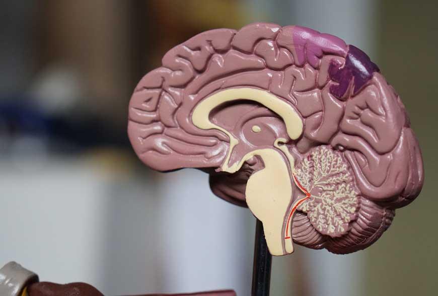 Nový lék na schizofrenii?